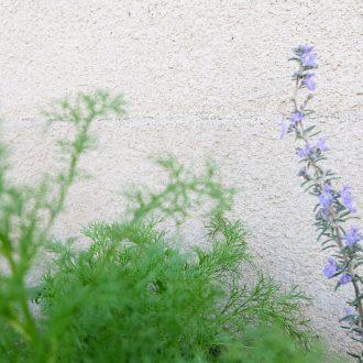 8. 花を摘みながら